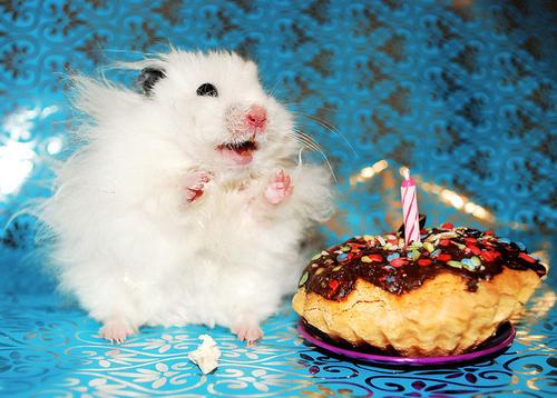 Birthday Hamster Funny Flamingo - Hamster birthday cake