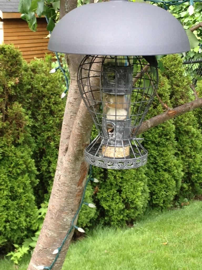 My mother's Squirrel-proof bird feeder